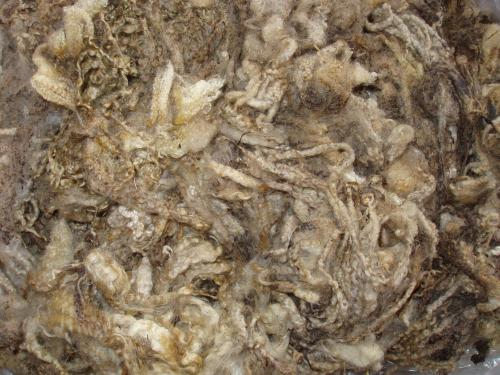 bfl fleece dirty