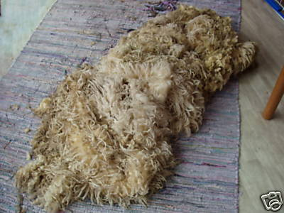 bfl fleece unwashed